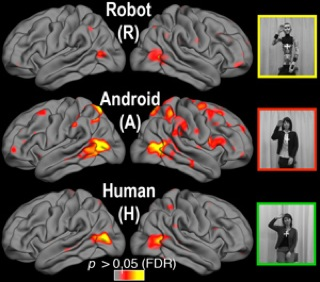 Robot vs. Human distinction in human brain